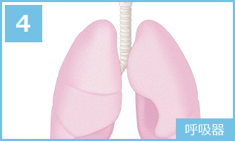 4 呼吸器